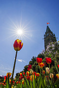 Architecture - Ottawa Tulip Festival by Mircea Costina Photography