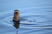 Duane Klipping - Otter Be In Pictures