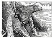 Brian Gilna - Otter