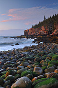 Maine Ocean Posters - Otter Cliffs At Dawn Poster by Stephen  Vecchiotti