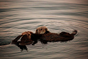 Sea Otter Posters - Otter Love Poster by Cheryl Young