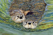 Otter Paintings - Otter Pals by Sandra Wilson