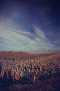 Cattails Photos - Our Day Will Come by Laurie Search
