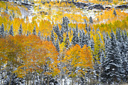 Ray Mathis - Ouray Fall Color