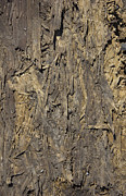 Out Door Ply Wood Tatter Floor  Print by Sirron Kyles