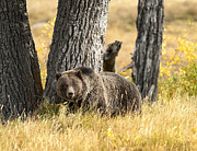 West Yellowstone Photos - Out For Lunch by Sandra Bronstein