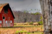 Rural Indiana Digital Art Prints - Out In The Country Print by Off The Beaten Path Photography - Andrew Alexander