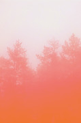 Surreal Landscape Photo Prints - Out Of Focus Print by Budi Satria Kwan