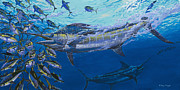 Striped Marlin Framed Prints - Out of the blue Off009 Framed Print by Carey Chen