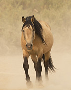 Wild Horses Framed Prints - Out of the Dust Framed Print by Carol Walker