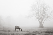 Grazing Horse Posters - Out of the Fog Poster by Scott Pellegrin