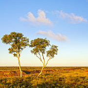 Australia Prints - Outback Australia Ghost Gums Print by Colin and Linda McKie