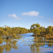 Water Lilies Art - Outback Australia Northern Territory James River Trees in Water by Colin and Linda McKie