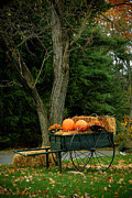 Yard Decorations Posters - Outdoor Fall Halloween Decorations Poster by Amy Cicconi