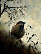 Sparrow Mixed Media - Outdoors by Lyriel Lyra