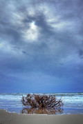Storm Prints Photo Prints - Outer Banks - Driftwood Bush on Beach in Surf I Print by Dan Carmichael