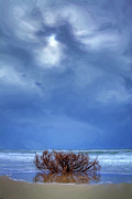 Storm Prints Prints - Outer Banks - Driftwood Bush on Beach in Surf II Print by Dan Carmichael