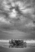Storm Prints Prints - Outer Banks - Driftwood Bush on Beach in Surf III Print by Dan Carmichael