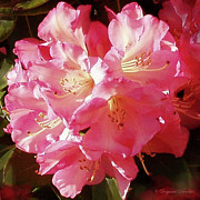 Flowering Bush Posters - Outrageous Rhodies Poster by Suzanne Schaefer