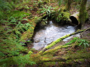 Joyce Dickens - Over-flowing Culvert In The Forest