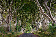 Dark Hedges Prints - Over the Hill Print by Andy Gibson