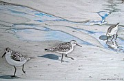 Sandpiper Drawings Prints - Overcast Day with Sanderlings Print by Linda Williams