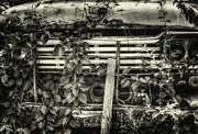 Old Ford Prints - Overgrown Ford Truck Print by Thomas Young