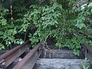 Railroad Spikes Art - Overgrown Tracks by David Addams