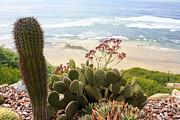 Overlooking San Elijo Beach Print by Ann Patterson