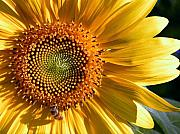 Overtime Photos - OVERTIME Sunflower with Honeybee Shadow by Sindi June Short