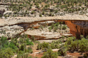 Natural Arch Posters - Owachomo Bridge - Natural Bridges Utah Poster by Christine Till