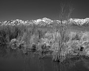 Owens River Metal Prints - Owens Valley Metal Print by Don Hall