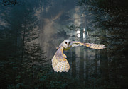 Maureen Tillman - Owl at Midnight