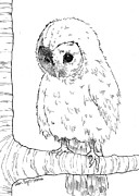 Barn Pen And Ink Drawings Prints - Owl Baby Print by Callan Rogers-Grazado