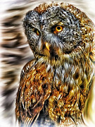 Perched Mixed Media Posters - Owl Poster by Todd and candice Dailey