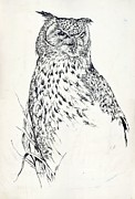 Alfred Drawings Posters - Owl Drawing Poster by Alfred Ng