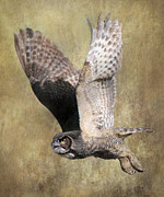 Great Horned Owl Framed Prints - Owl in Flight Framed Print by Angie Vogel