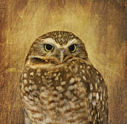 Burrowing Owl Framed Prints - Owl Framed Print by Kim Hojnacki
