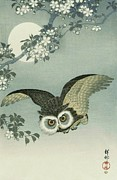 Owl - Moon - Cherry Blossoms Print by Pg Reproductions