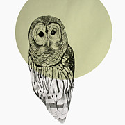 Mod Drawings - Owl by Morgan Kendall