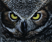 Face Drawings - Owl by Natasha Denger