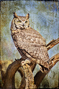 Owl On A Tree Print by Barbara Manis