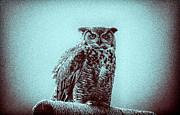 TONY GRIDER - Owl on Perch