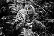 Modernart Photo Posters - Owl with mouse Poster by Fabian Roessler