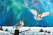 Amy Scholten - Owls Under the Northern...