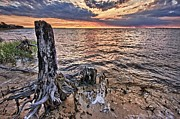 Beach Fence Digital Art Posters - Oyster Bay Stump Sunset Poster by Michael Thomas