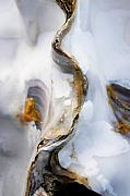 Shell Photo Prints - Oyster  Print by Richard George
