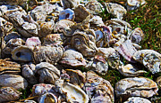 Sea Shell Prints - Oysters 01 Print by Melissa Sherbon