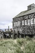 Craig Perry-Ollila - Oysterville Sea Farms