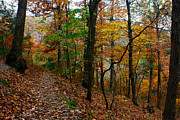 Ozark Mountains Photos - Ozark Woods by Jon Emery